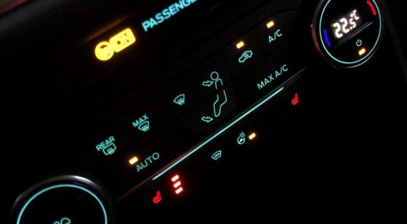 V vožnji s Fiesto Active uživa tudi naš čuvaj Bax